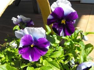 flowers-036